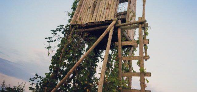 Hinweise der Unfallkassen Nr. 21: Kita-Waldausflug