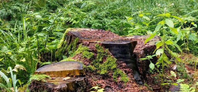 Hinweise der Unfallkassen Nr. 28: Kita-Waldausflug & Fuchsbandwurm
