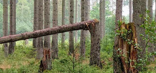 Hinweise der Unfallkasse Nr. 32: Kita-Waldausflug