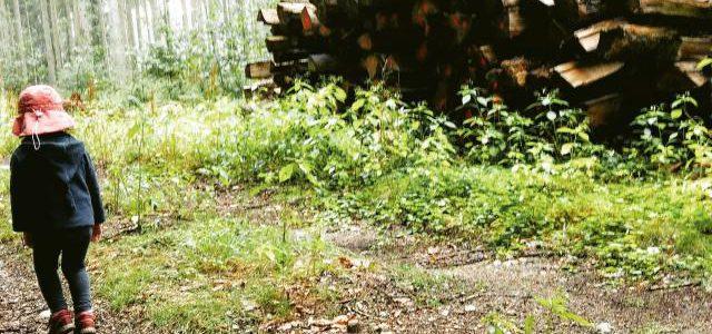 Hinweise der Unfallkassen Nr. 22: Kita-Waldausflug