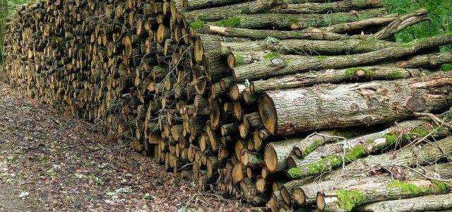 Hinweise der Unfallkassen Nr. 30: Kita-Waldausflug und gestapelte Baumstämme