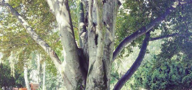 Hinweise der Unfallkassen Nr. 62: Kita & Kletterbäume