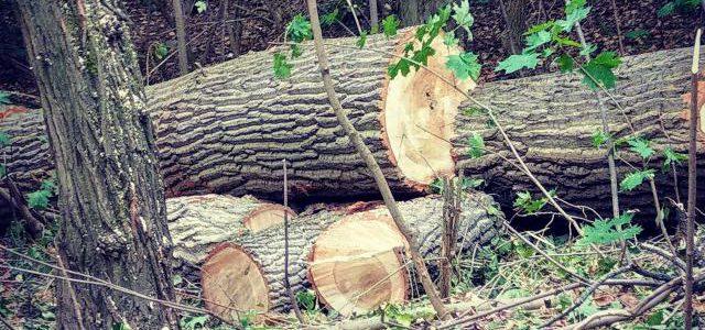 Hinweise der Unfallkassen Nr. 68: Kita-Waldausflug