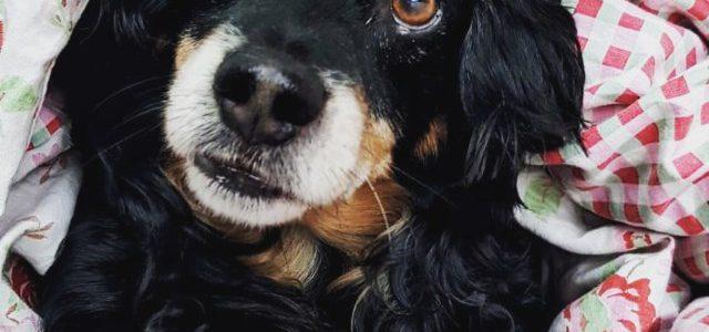 Hinweise der Unfallkassen Nr. 254: Kita-Hunde, Tierpädagogik & Kinderbetreuung