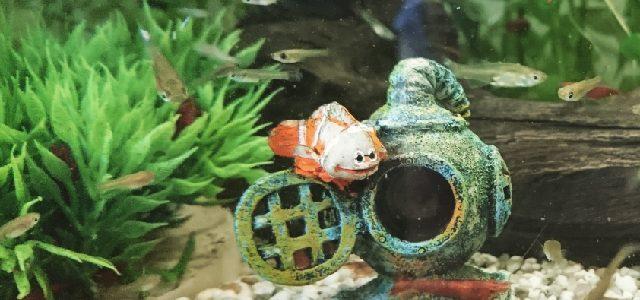 Hinweise der Unfallkassen Nr. 284: Kita-Aquarium und die Unfallkassen-Hinweise